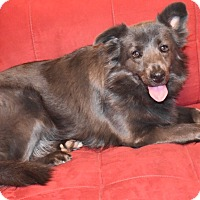 Adopt A Pet :: Zoey - Denver, NC