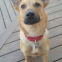 Adopt A Pet :: Keanu - Hewitt, NJ