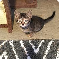 Adopt A Pet :: Misty - Butner, NC