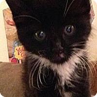 Adopt A Pet :: Tasha - Whitestone, NY
