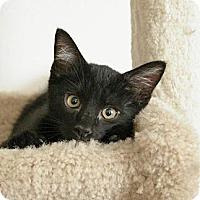 Adopt A Pet :: Ebony - Sacramento, CA