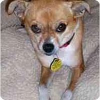Adopt A Pet :: Petunia - San Francisco, CA