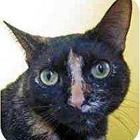 Adopt A Pet :: Belinda - Marietta, GA