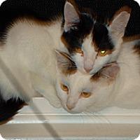 Adopt A Pet :: Bella&Panda - Springfield, PA