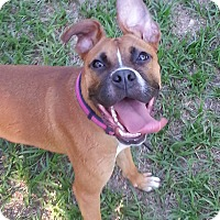 Adopt A Pet :: Stella - Kingwood, TX