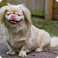 Adopt A Pet :: Ally - Virginia Beach, VA