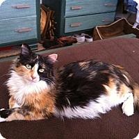Adopt A Pet :: Maggie - Fairborn, OH
