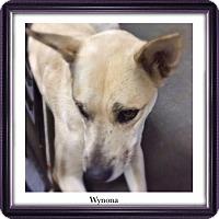 Adopt A Pet :: Wynona - Boston, MA