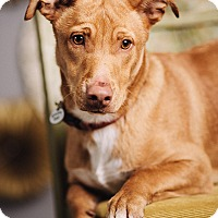 Adopt A Pet :: Butters - Portland, OR