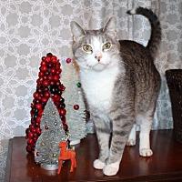 Adopt A Pet :: Squonk - St. Louis, MO