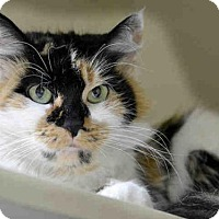 Adopt A Pet :: RISA - Pittsburgh, PA