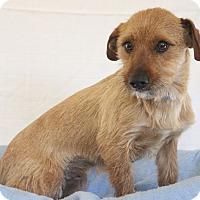 Adopt A Pet :: Grant - Waldorf, MD