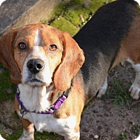 Adopt A Pet :: Remy ON MEDICAL HOLD - Atlanta, GA