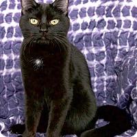 Adopt A Pet :: Velvet - St Louis, MO