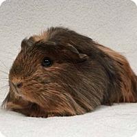 Adopt A Pet :: Millinocket - Imperial Beach, CA