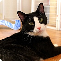 Adopt A Pet :: Moonshadow - Gaithersburg, MD