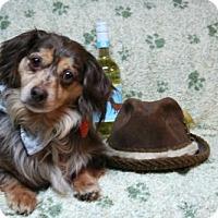 Adopt A Pet :: Beenie Weenie - Sioux Falls, SD