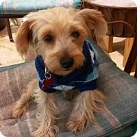 Adopt A Pet :: Mr. Smee - Deltona, FL