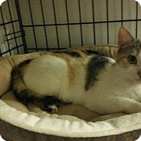 Adopt A Pet :: Sabrina - Forest Hills, NY