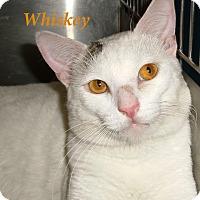 Adopt A Pet :: Whiskey - El Cajon, CA
