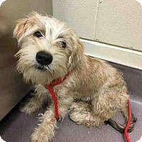 Adopt A Pet :: A024872 - Norman, OK