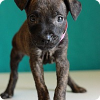 Adopt A Pet :: Saints - Waldorf, MD