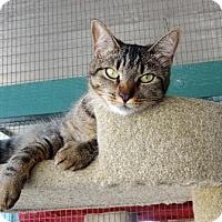 Adopt A Pet :: Thelma - Lathrop, CA