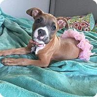 Adopt A Pet :: Arya - San Diego, CA