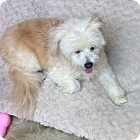 Adopt A Pet :: Carrie - Tavares, FL