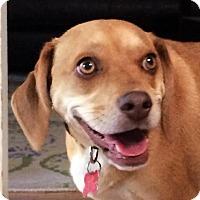 Adopt A Pet :: Sandie - Oakley, CA