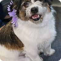 Adopt A Pet :: Daisy - South El Monte, CA