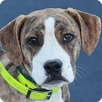 Adopt A Pet :: Anniston - ADOPTION IN PROGRESS - Staunton, VA