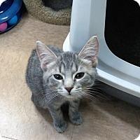 Adopt A Pet :: Aurora - Warrenton, MO