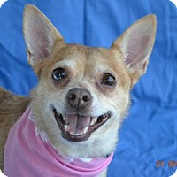 Adopt A Pet :: CHA-CHA - Chicopee, MA