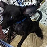 Adopt A Pet :: JJ/Yoda - Phoenix, AZ
