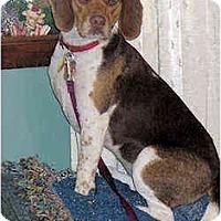 Adopt A Pet :: Ruby - Novi, MI