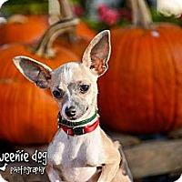 Adopt A Pet :: Rascal - Henderson, NC