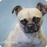 Adopt A Pet :: Alli - Phoenix, AZ