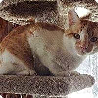 Adopt A Pet :: Molson - Byron Center, MI