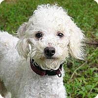 Adopt A Pet :: Pierre - Mocksville, NC