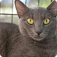 Adopt A Pet :: Natasha - Brooklyn, NY