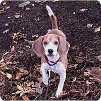 Adopt A Pet :: Sandra Dee - Blairstown, NJ