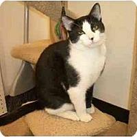 Adopt A Pet :: Ziggy - Scottsdale, AZ