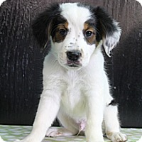 Adopt A Pet :: Jet - Wytheville, VA