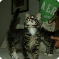 Adopt A Pet :: Monique - Ocala, FL