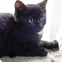 Adopt A Pet :: Noel - N. Billerica, MA