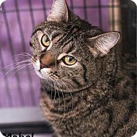 Adopt A Pet :: Mabel - Camden, DE