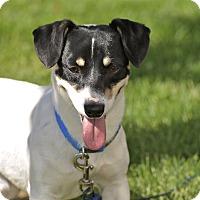 Adopt A Pet :: Rico - Meridian, ID