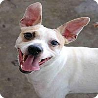 Adopt A Pet :: GONZO - Fort Walton Beach, FL