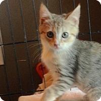 Adopt A Pet :: Kato - East Brunswick, NJ